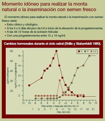 progesterona canina